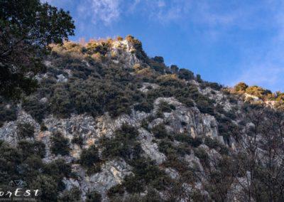Il magnifico bosco di Lecci