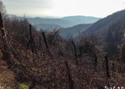 Paesaggio vigne Monteprato
