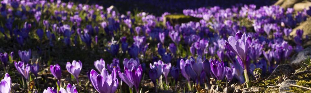Riparte il ciclo dell'anno: Primavera in arrivo!