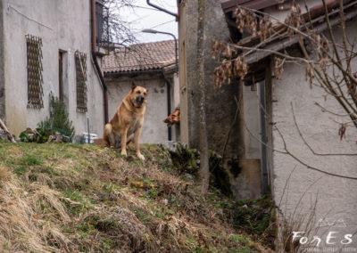 Il Guardiano di Montefosca