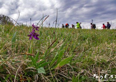 fioritura di anacamptis morio orchide minore orchidea selvatica
