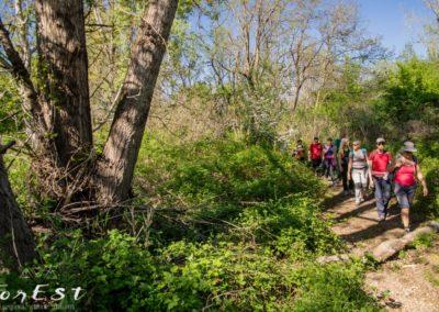 boschi golenali ripariali del torrente torre nel parco del torre del comune di udine