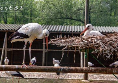 cicogna bianca oasi dei quadris di fagagna simbolo assieme all'ibis eremita