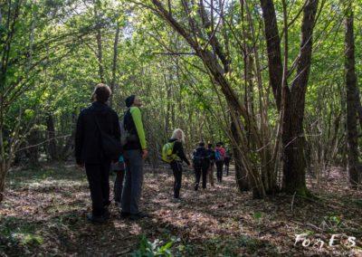camminando nei boschi durante un'escursione con guida naturalistica