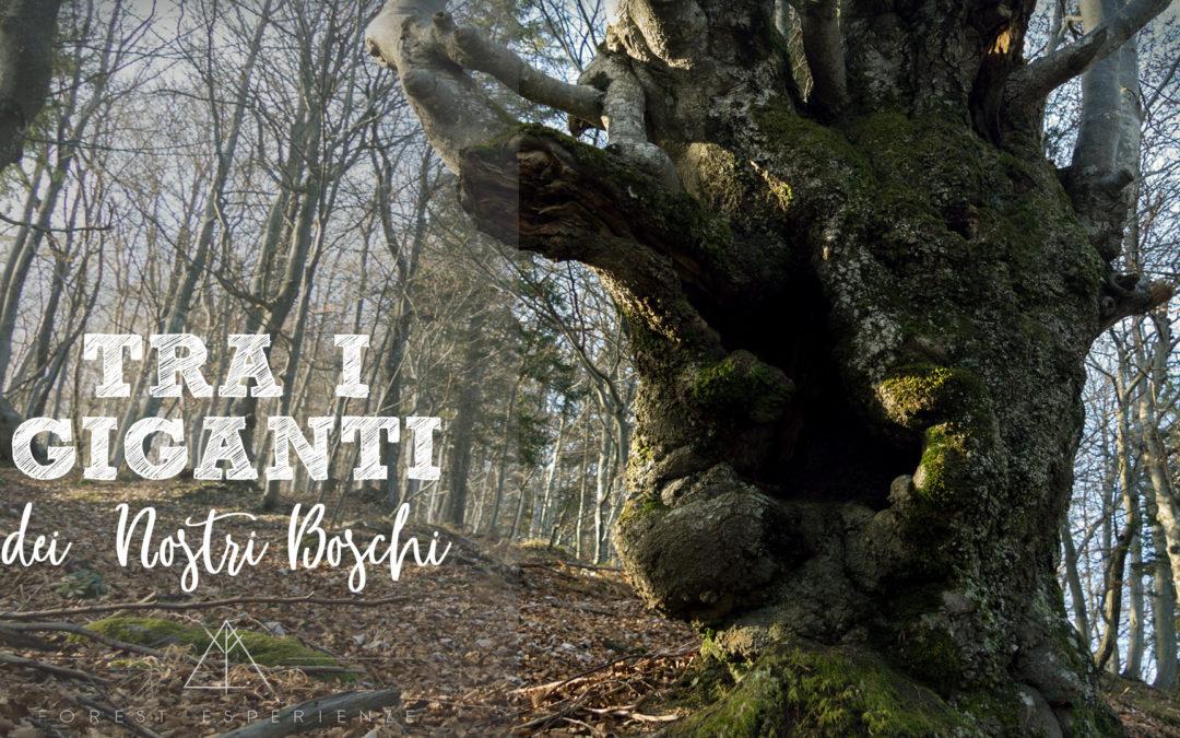 Tra i giganti dei nostri boschi… sul Monte Nebria: Racconto dell'Esperienza