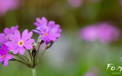 Nel cuore della primavera