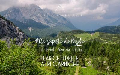 Tra i Lariceti delle Alpi Carniche: Racconto dell'Esperienza