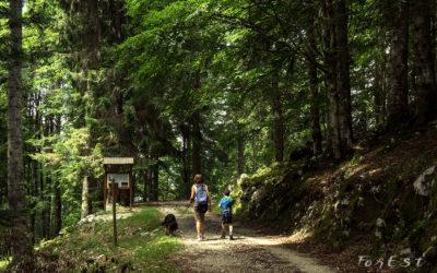 Alla scoperta delle foreste vetuste del Cansiglio: Racconto dell'Esperienza