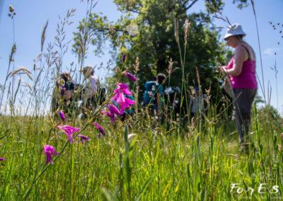Circondati dai Gladioli palustri - specie ultraprotetta