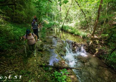 Escursione naturalistica guidata a piedi tra le colline moreniche lungo il sentiero Stringher Tacoli tra Moruzzo e Villalta di Fagagna