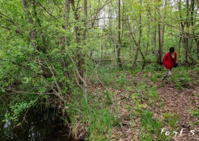 Escursione naturalistica guidata al biotopo della Torbiera di Borgo Pegoraro a Moruzzo