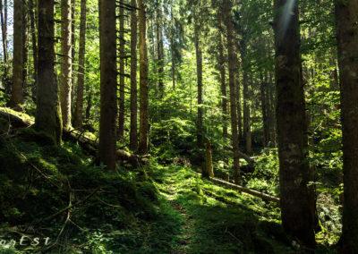 Le foreste vetuste
