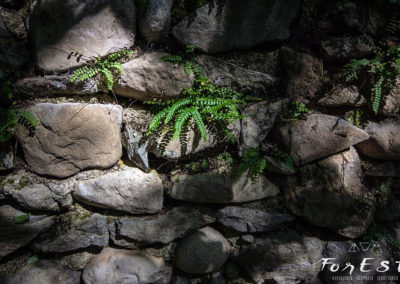 escursione guidata tra le colline moreniche del friuli venezia giulia