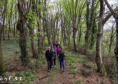 Escursione naturalistica guidata a piedi tra le colline moreniche di Fagagna, Battaglia e Arcano