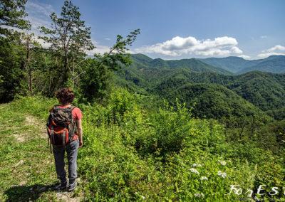 escursione naturalistica guidata dei castellani tra storia e natura a cergneu monteprato nei boschi di nimis prealpi giulie