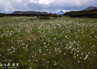 Escursione ai Piani di Lanza sotto la Creta di Aip