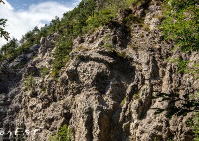 Il mitico Leone di Roccia!