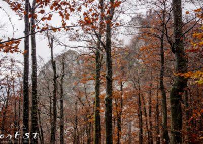 Giochi di nuvole nella Selva