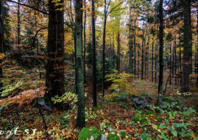Molteplici colori della Foresta