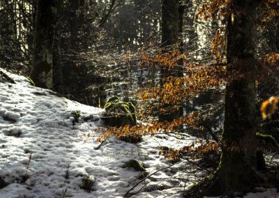 02_Febbraio 2017 - Foresta di Tarvisio