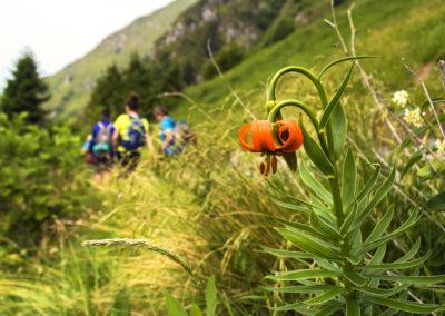 06_Giugno 2017 - Lilium Carniolicum sul Granmonte (P. Giulie)