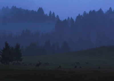 10_Ottobre 2017 - Cervi nella Foresta del Cansiglio