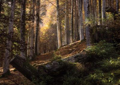10_Ottobre 2018 - Foresta del Cansiglio
