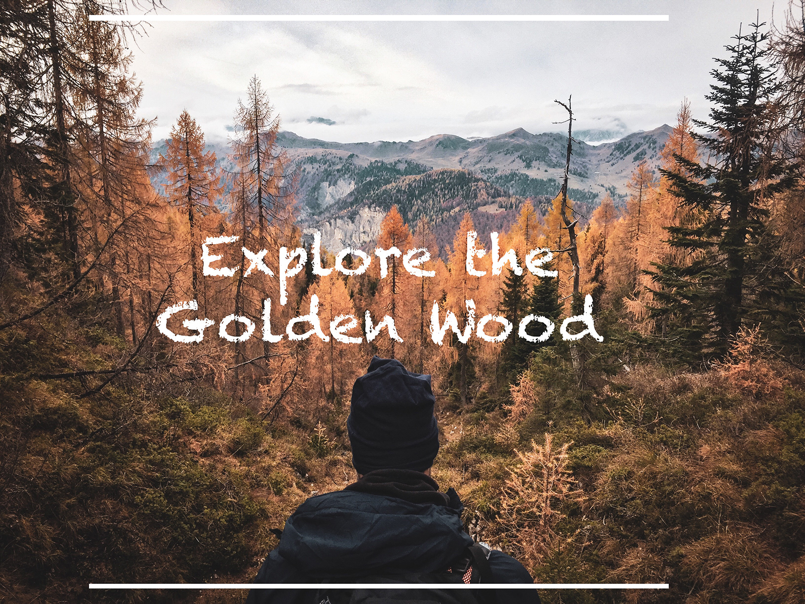 Explore the Golden Wood