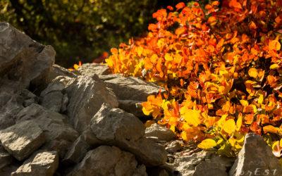 Ciclo dei Boschi: La Boscaglia Carsica – Racconto dell'Esperienza