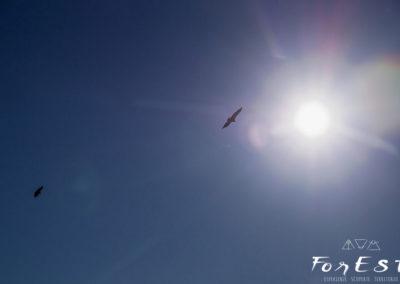 Maestosi grifoni in volo