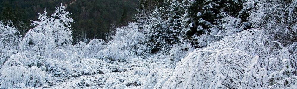 Accogliamo l'Inverno… in pieno stile ForEst!