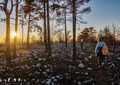 La Natura riparte dopo l'incendio