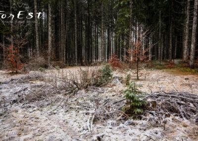 La neve inizia a cadere nel bosco