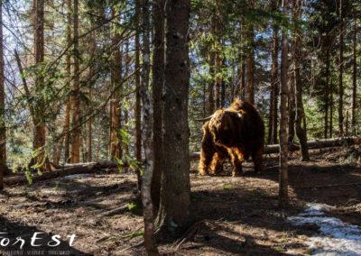 Presenze nel bosco