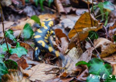 Sfuggenti presenze nel bosco