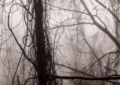 Visioni nella nebbia