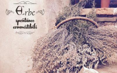 Alla ricerca delle erbe selvatiche – prima parte