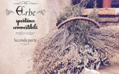 Alla ricerca delle erbe selvatiche – seconda parte