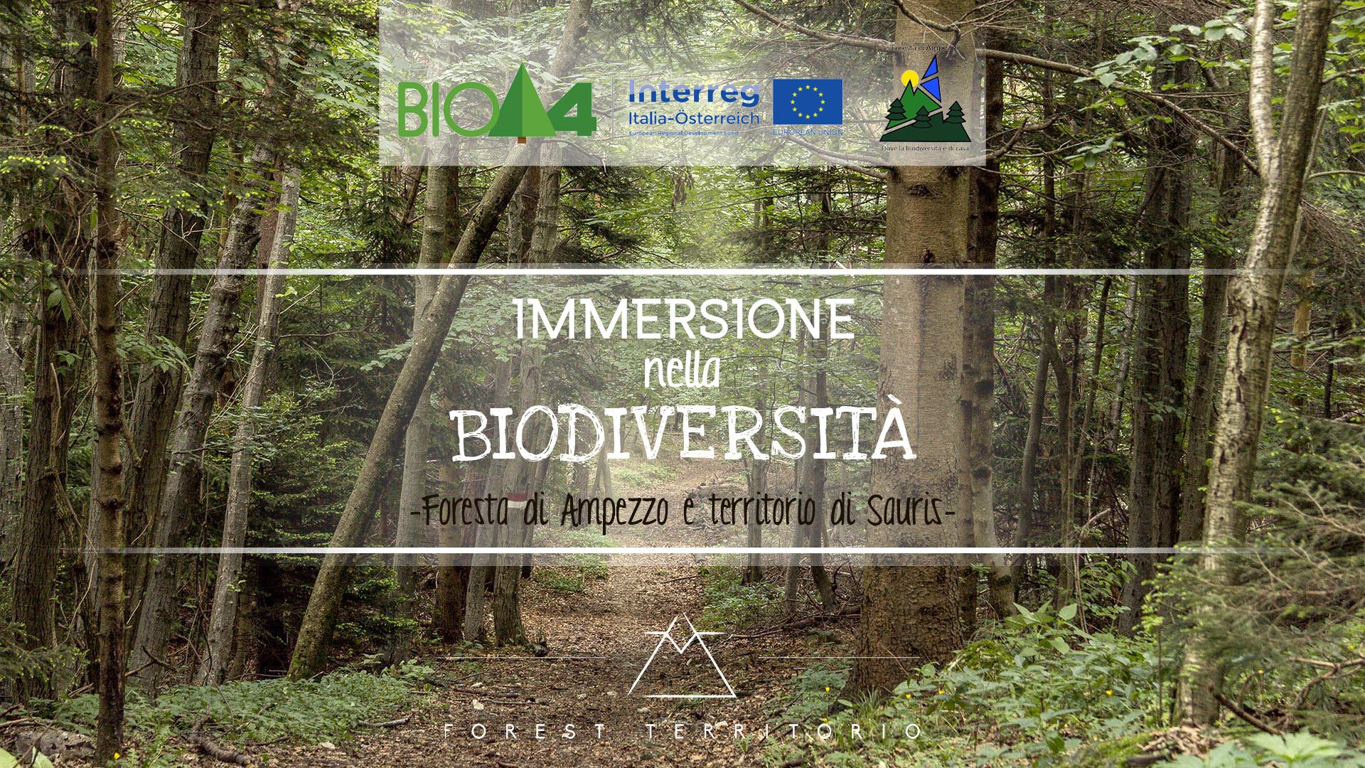 Ciclo escursioni ampezzo sauris biodiversità della foresta con ForEst Studio Naturalistico
