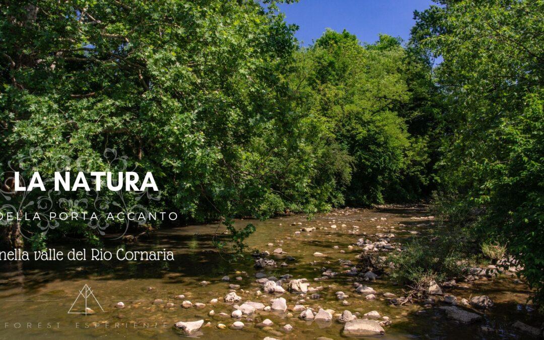 Escursione nei boschi del Rio Cornaria