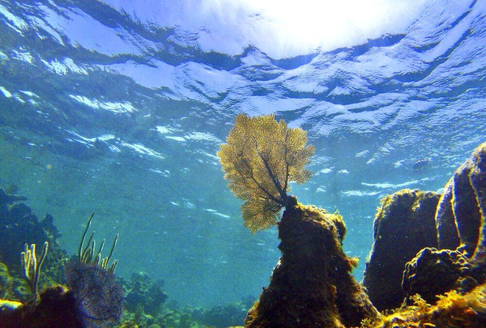 Rubrica geologica – la Formazione Dolomia Principale