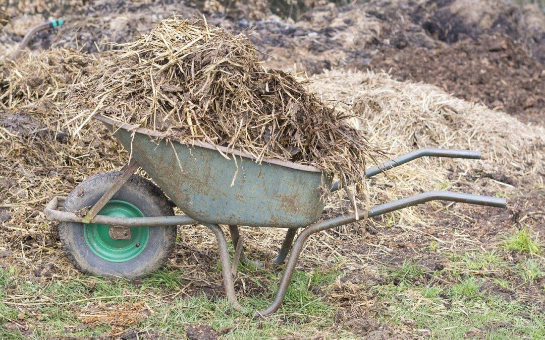 Rubrica di agroecologia – Dal letame nascono i fiori