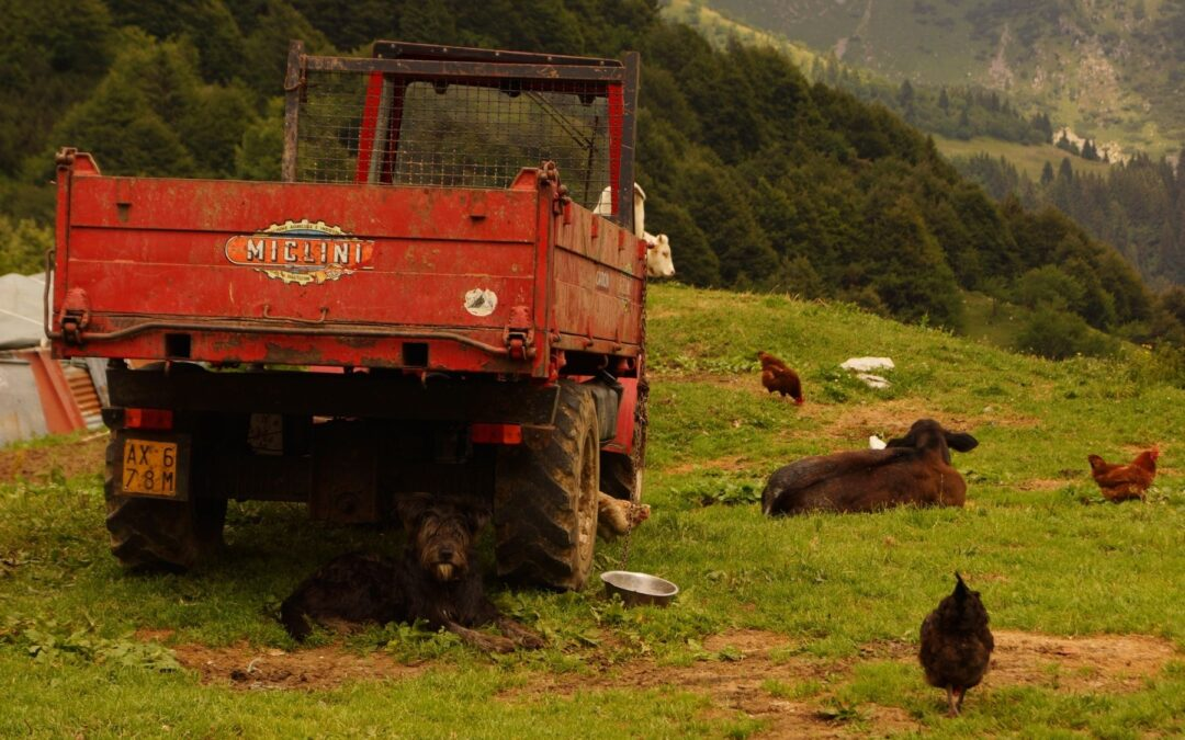 Rubrica di agroecologia – Bio o non bio?