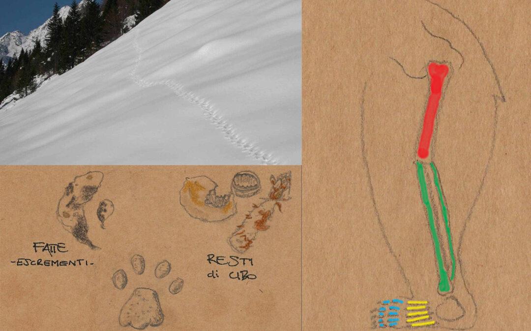 Rubrica Impronte animali – Tracce o segni di presenza?