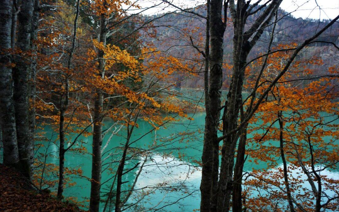 BIOΔ4 – Nella Biodiversità della Foresta di Ampezzo