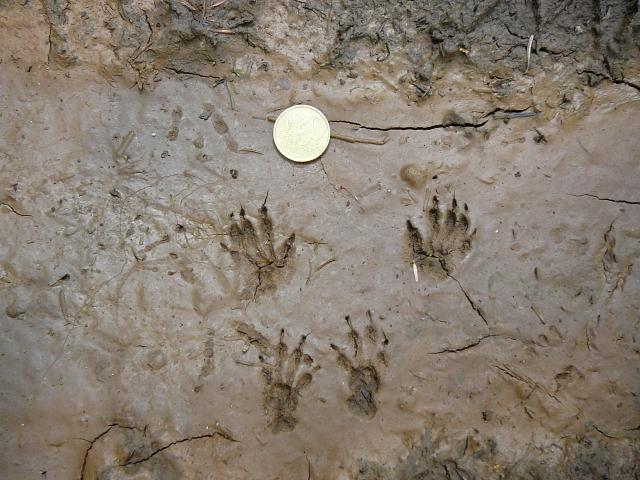 Rubrica Impronte animali – Le orme più strane
