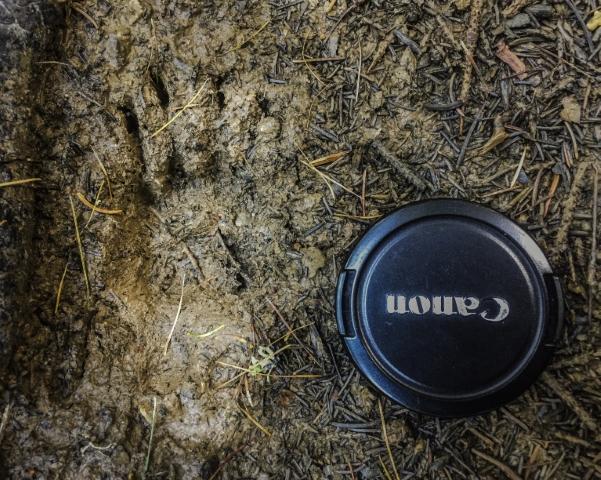 """Rubrica Impronte animali – Cosa vuol dire essere un """"plantigrado""""?"""