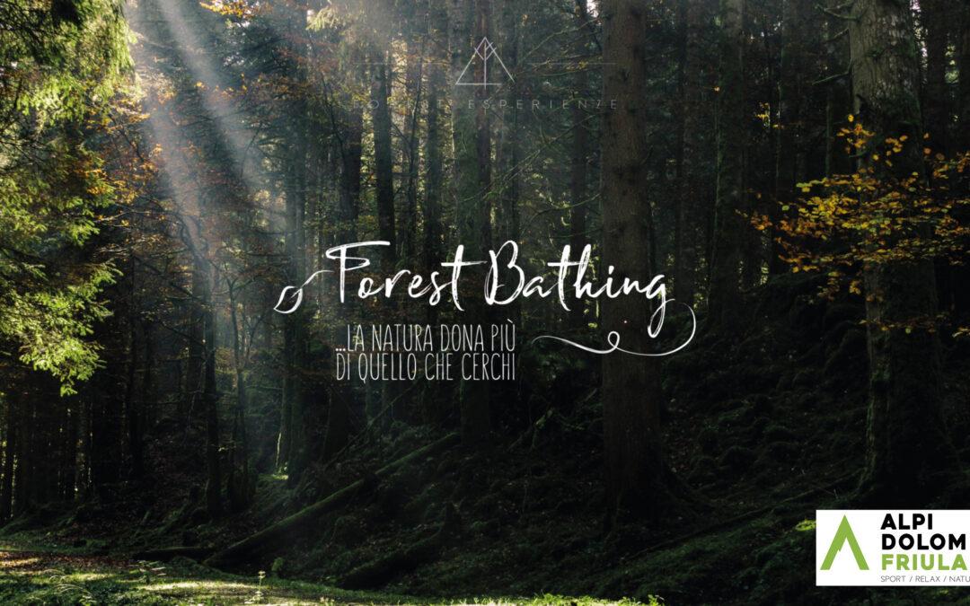 Introduzione al Forest Bathing tra boschi e torbiere